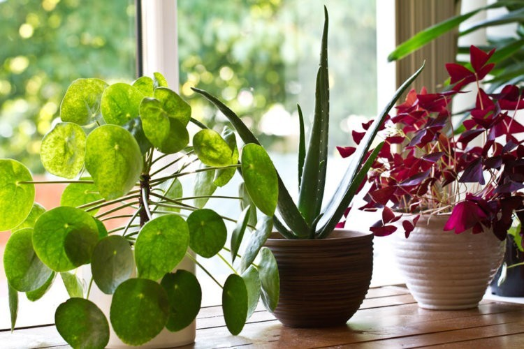 5 Indoor Gardening Tips & Tools